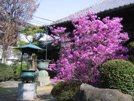 花の寺めぐり 11号-6