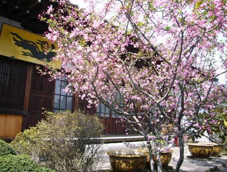 花の寺めぐり 11号-10