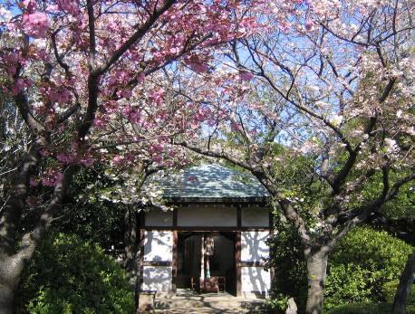 花の寺めぐり 11号-13