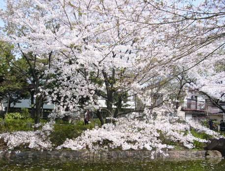 花の寺めぐり11号-15