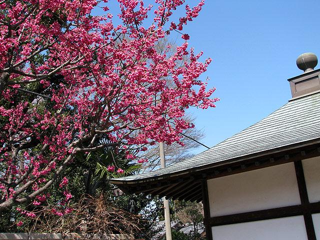 第17号 松應寺