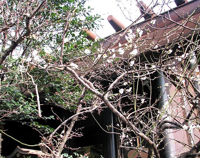 第17号 氷川神社