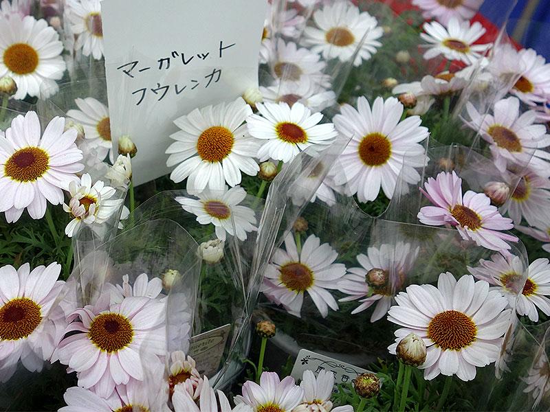 第166回春のびっくり市花鉢管理法