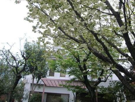 花の寺めぐり 11号-2