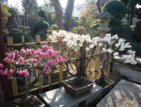 花の寺めぐり 11号-9
