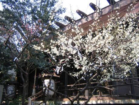 花の寺めぐり 11号-14