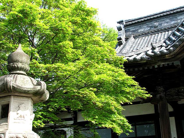 第17号 高圓寺